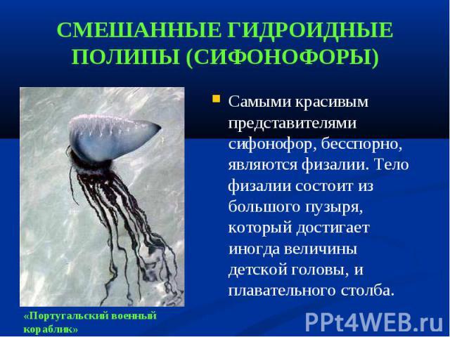 Самыми красивым представителями сифонофор, бесспорно, являются физалии. Тело физалии состоит из большого пузыря, который достигает иногда величины детской головы, и плавательного столба. Самыми красивым представителями сифонофор, бесспорно, являются…