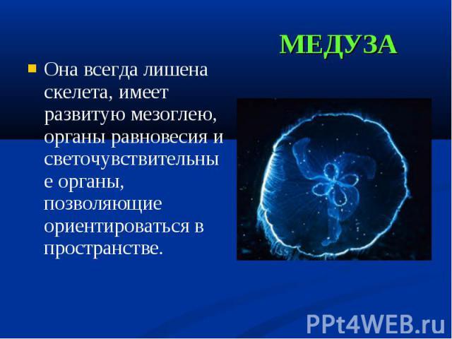 Она всегда лишена скелета, имеет развитую мезоглею, органы равновесия и светочувствительные органы, позволяющие ориентироваться в пространстве. Она всегда лишена скелета, имеет развитую мезоглею, органы равновесия и светочувствительные органы, позво…