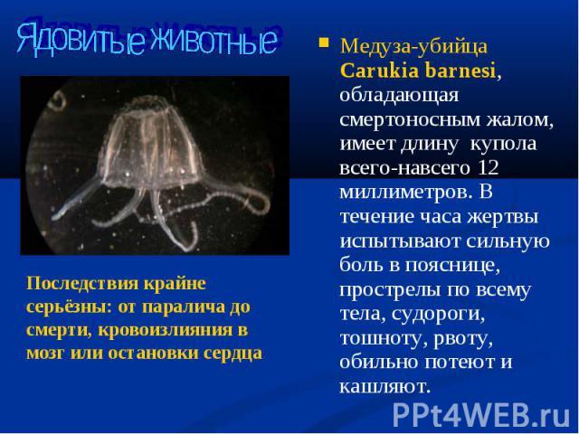Медуза-убийца Carukia barnesi, обладающая смертоносным жалом, имеет длину купола всего-навсего 12 миллиметров. В течение часа жертвы испытывают сильную боль в пояснице, прострелы по всему тела, судороги, тошноту, рвоту, обильно потеют и кашляют. Мед…