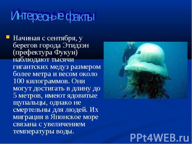 Начиная с сентября, у берегов города Этидзэн (префектура Фукуи) наблюдают тысячи гигантских медуз размером более метра и весом около 100 килограммов. Они могут достигать в длину до 5 метров, имеют ядовитые щупальцы, однако не смертельны для людей. И…