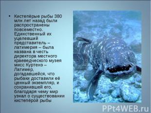 Кистепёрые рыбы 380 млн лет назад были распространены повсеместно. Единственный