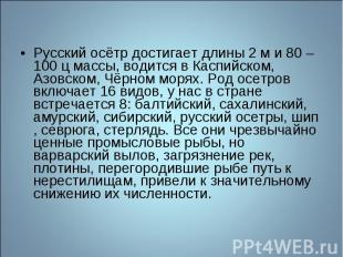 Русский осётр достигает длины 2 м и 80 – 100 ц массы, водится в Каспийском, Азов