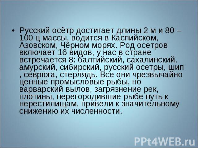 Русский осётр достигает длины 2 м и 80 – 100 ц массы, водится в Каспийском, Азовском, Чёрном морях. Род осетров включает 16 видов, у нас в стране встречается 8: балтийский, сахалинский, амурский, сибирский, русский осетры, шип , севрюга, стерлядь. В…