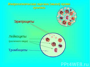Эритроциты Эритроциты