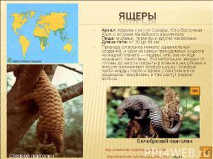 Ареал: Африка к югу от Сахары, Юго-Восточная Азия и острова Малайского архипелаг