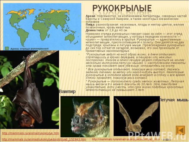 Ареал: повсеместно, за исключением Антарктиды, северных частей Европы и Северной Америки, а также некоторых океанических островов Пища: разнообразная: насекомые, плоды и нектар цветов, мелкие позвоночные, кровь животных. Длина тела: от 2,8 до 40 см …