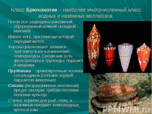 Почти все защищены раковиной, образованной кожной складкой – мантией. Почти все