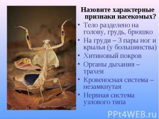 Назовите характерные признаки насекомых? Назовите характерные признаки насекомых