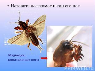 Назовите насекомое и тип его ног Назовите насекомое и тип его ног