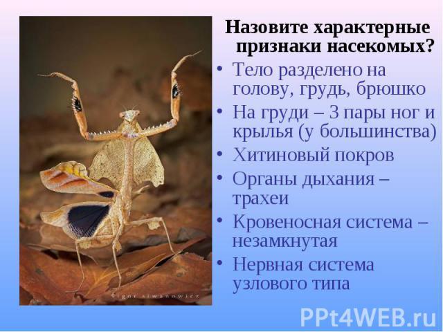 Назовите характерные признаки насекомых? Назовите характерные признаки насекомых? Тело разделено на голову, грудь, брюшко На груди – 3 пары ног и крылья (у большинства) Хитиновый покров Органы дыхания – трахеи Кровеносная система – незамкнутая Нервн…
