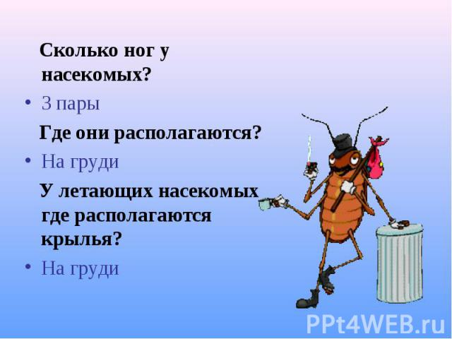 Сколько ног у насекомых? Сколько ног у насекомых? 3 пары Где они располагаются? На груди У летающих насекомых где располагаются крылья? На груди