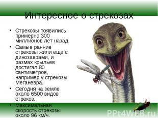Стрекозы появились примерно 300 миллионов лет назад. Стрекозы появились примерно