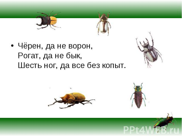 Чёрен, да не ворон, Рогат, да не бык, Шесть ног, да все без копыт. Чёрен, да не ворон, Рогат, да не бык, Шесть ног, да все без копыт.