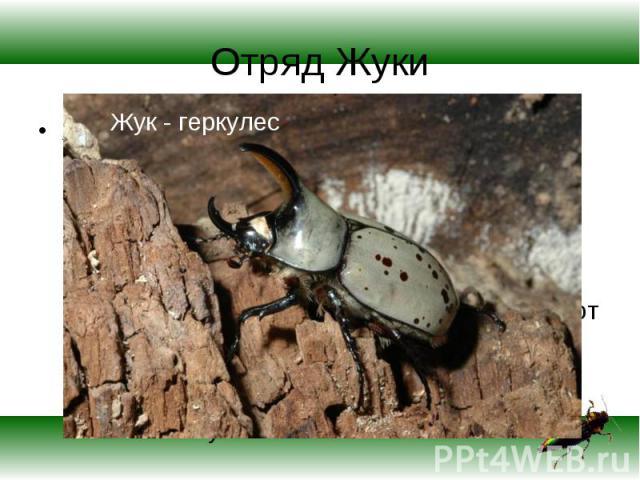 ЖУКИ (жесткокрылые), наиболее многочисленный отряд насекомых, включающий более 180 семейств, всего около 250 тыс. видов. Разделяется на два подотряда — хищных и разноядных . Встречаются повсеместно, от полярных областей до тропиков. Размеры варьирую…
