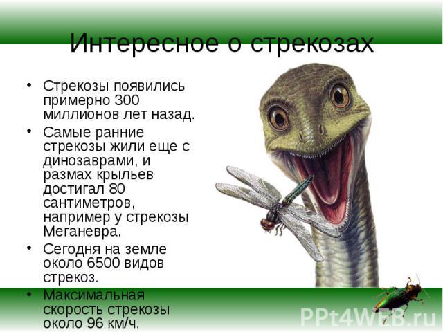 Стрекозы появились примерно 300 миллионов лет назад. Стрекозы появились примерно 300 миллионов лет назад. Самые ранние стрекозы жили еще с динозаврами, и размах крыльев достигал 80 сантиметров, например у стрекозы Меганевра. Сегодня на земле около 6…