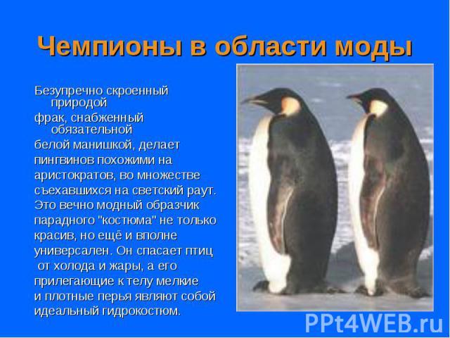 """Безупречно скроенный природой Безупречно скроенный природой фрак, снабженный обязательной белой манишкой, делает пингвинов похожими на аристократов, во множестве съехавшихся на светский раут. Это вечно модный образчик парадного """"костюма"""" н…"""