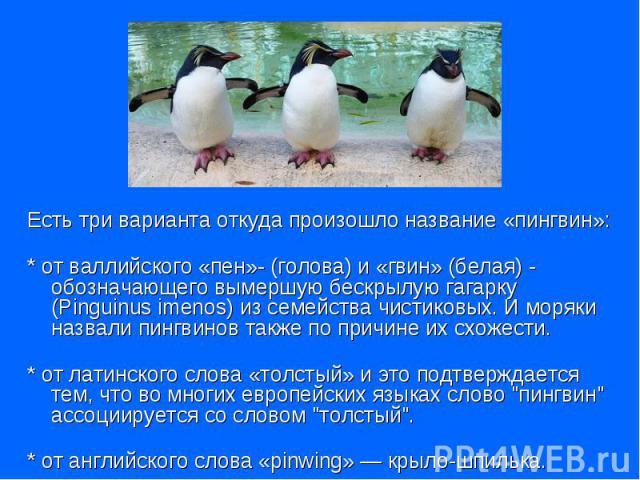 Есть три варианта откуда произошло название «пингвин»: * от валлийского «пен»- (голова) и «гвин» (белая) - обозначающего вымершую бескрылую гагарку (Pinguinus imenоs) из семейства чистиковых. И моряки назвали пингвинов также по причине их схожести. …