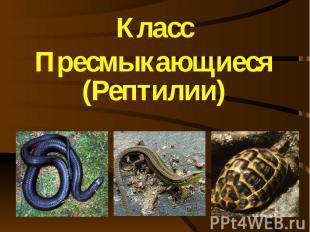 Класс Пресмыкающиеся (Рептилии)