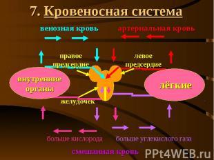 7. Кровеносная система
