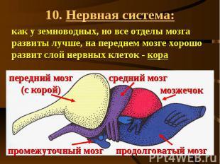 10. Нервная система: