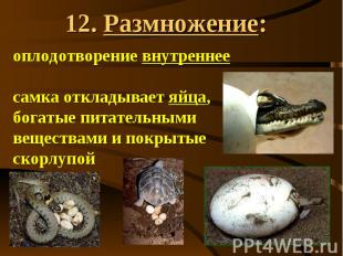 12. Размножение: