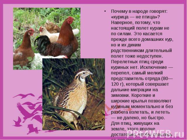 Почему в народе говорят: «курица — не птица»? Наверное, потому, что настоящий полет курам не по силам. Это касается прежде всего домашних кур, но и их диким родственникам длительный полет тоже недоступен. Перелетных птиц среди куриных нет. Исключени…