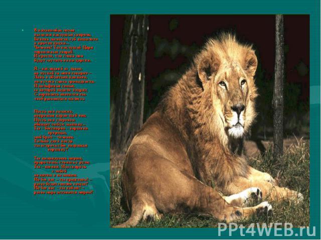 В катакомбах музея пылится пастушья свирель, Бивень мамонта, зуб кашалота и прочие цацки... Человек! Ты послушай Царя терпеливых зверей. И прости, что слова мои будут звучать не по-царски. Я – последний из львов. но пускай за меня говорят – Лань в о…