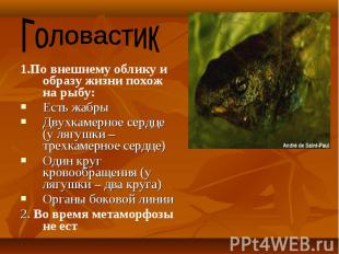 1.По внешнему облику и образу жизни похож на рыбу: 1.По внешнему облику и образу