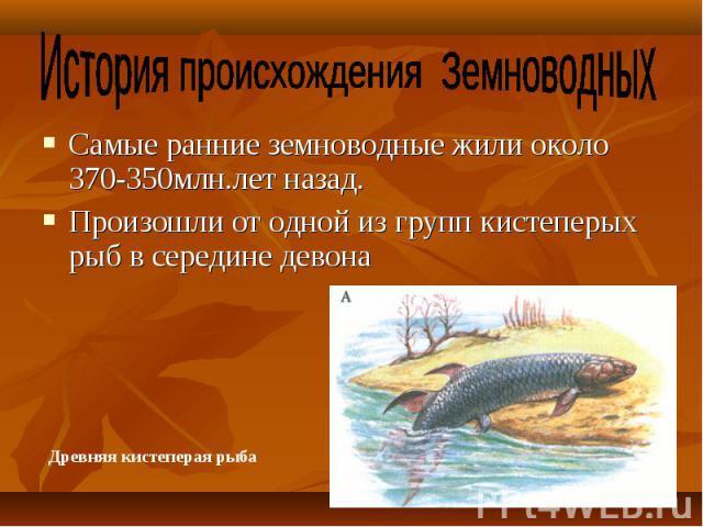 Самые ранние земноводные жили около 370-350млн.лет назад. Самые ранние земноводные жили около 370-350млн.лет назад. Произошли от одной из групп кистеперых рыб в середине девона