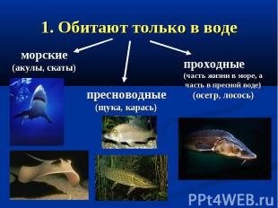 1. Обитают только в воде