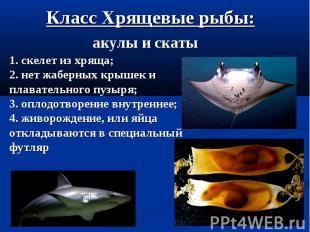 Класс Хрящевые рыбы: