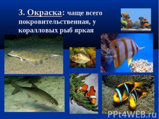 3. Окраска: чаще всего покровительственная, у коралловых рыб яркая