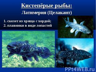 Кистепёрые рыбы: