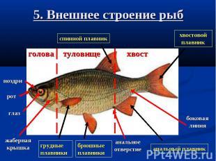 5. Внешнее строение рыб