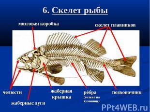 6. Скелет рыбы
