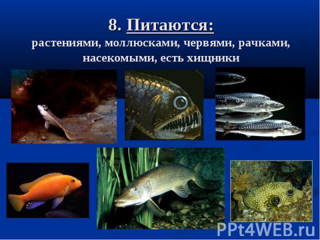 8. Питаются: растениями, моллюсками, червями, рачками, насекомыми, есть хищники