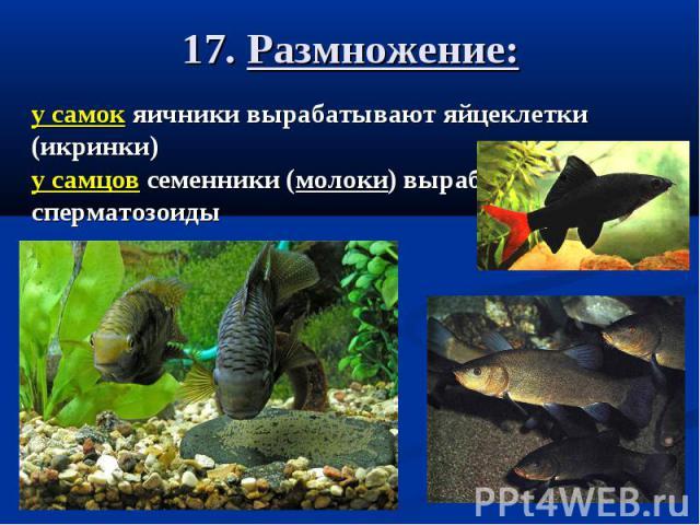 17. Размножение:
