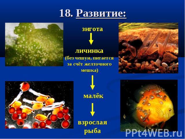 18. Развитие:
