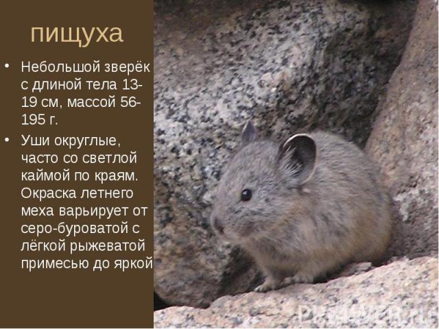 Небольшой зверёк с длиной тела 13-19 см, массой 56-195 г. Небольшой зверёк с длиной тела 13-19 см, массой 56-195 г. Уши округлые, часто со светлой каймой по краям. Окраска летнего меха варьирует от серо-буроватой с лёгкой рыжеватой примесью до яркой