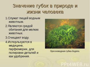 1.Служат пищей водным животным. 1.Служат пищей водным животным. 2.Являются средо