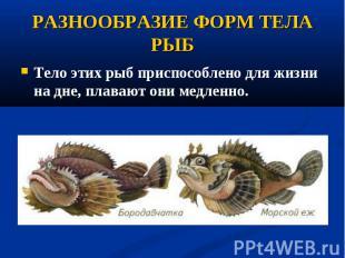 Тело этих рыб приспособлено дляжизни на дне, плавают они медленно. Тело эт