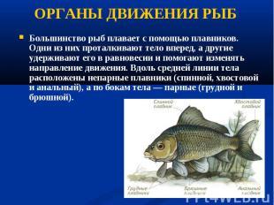 Большинство рыб плавает с помощью плавников. Одни из них проталкивают тело впере