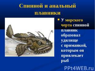 У морского черта спинной плавник образовал удилище сприманкой, которым он