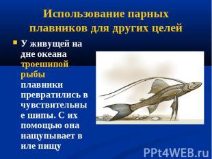 У живущей на дне океана троешипой рыбы плавники превратились в чувствительные ши