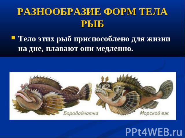Тело этих рыб приспособлено дляжизни на дне, плавают они медленно. Тело этих рыб приспособлено дляжизни на дне, плавают они медленно.