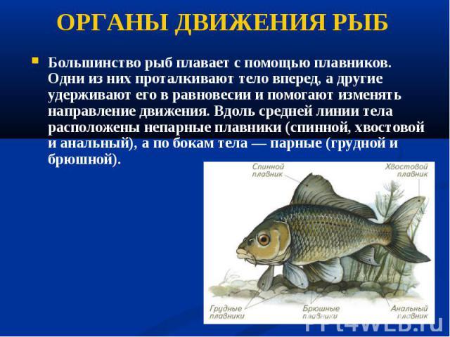 Большинство рыб плавает с помощью плавников. Одни из них проталкивают тело вперед, а другие удерживают его в равновесии и помогают изменять направление движения. Вдоль средней линии тела расположены непарные плавники (спинной, хвостовой и анальный),…