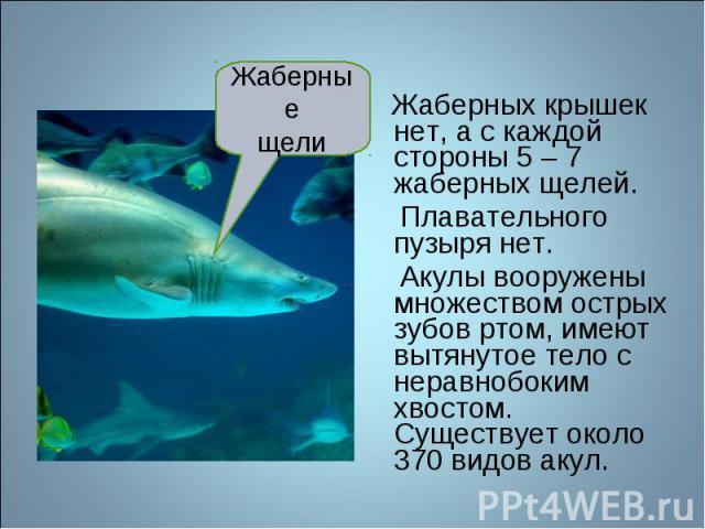 Жаберных крышек нет, а с каждой стороны 5 – 7 жаберных щелей. Плавательного пузыря нет. Акулы вооружены множеством острых зубов ртом, имеют вытянутое тело с неравнобоким хвостом. Существует около 370 видов акул.