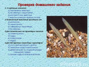 1. К хордовым относят: 1. К хордовым относят: а) теплокровных животных; б) бесче