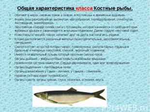 Обитают в морях, океанах, реках и озёрах, в постоянных и временных водоёмах. Оби
