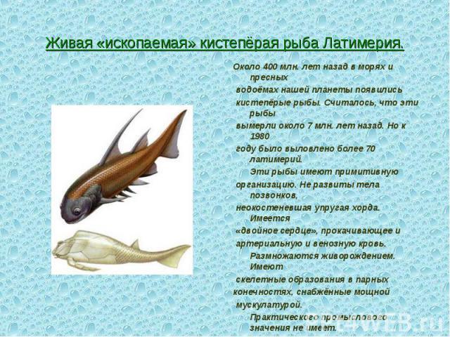 Около 400 млн. лет назад в морях и пресных Около 400 млн. лет назад в морях и пресных водоёмах нашей планеты появились кистепёрые рыбы. Считалось, что эти рыбы вымерли около 7 млн. лет назад. Но к 1980 году было выловлено более 70 латимерий. Эти рыб…
